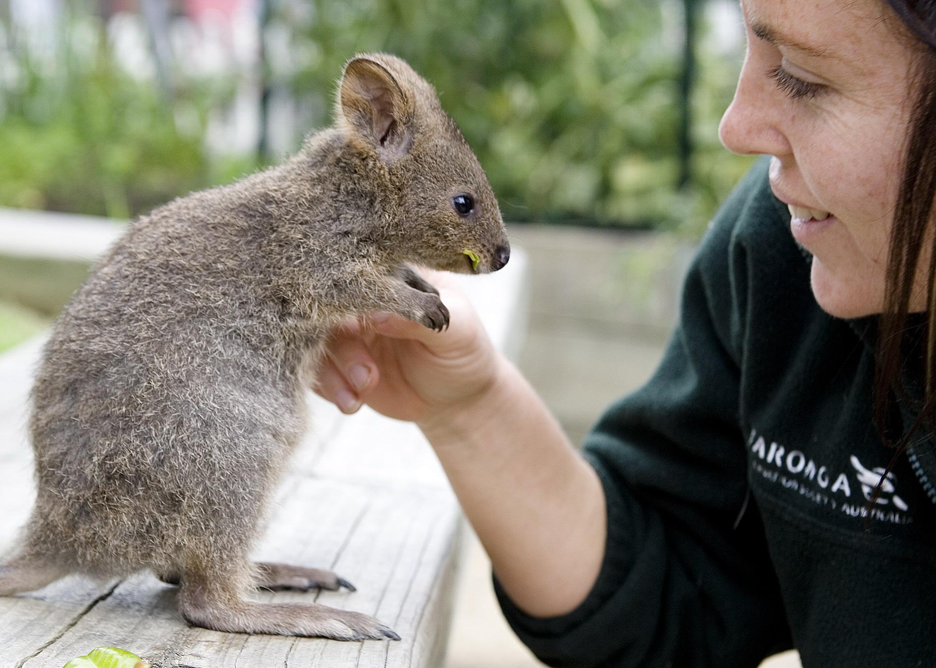 Zoo Australië