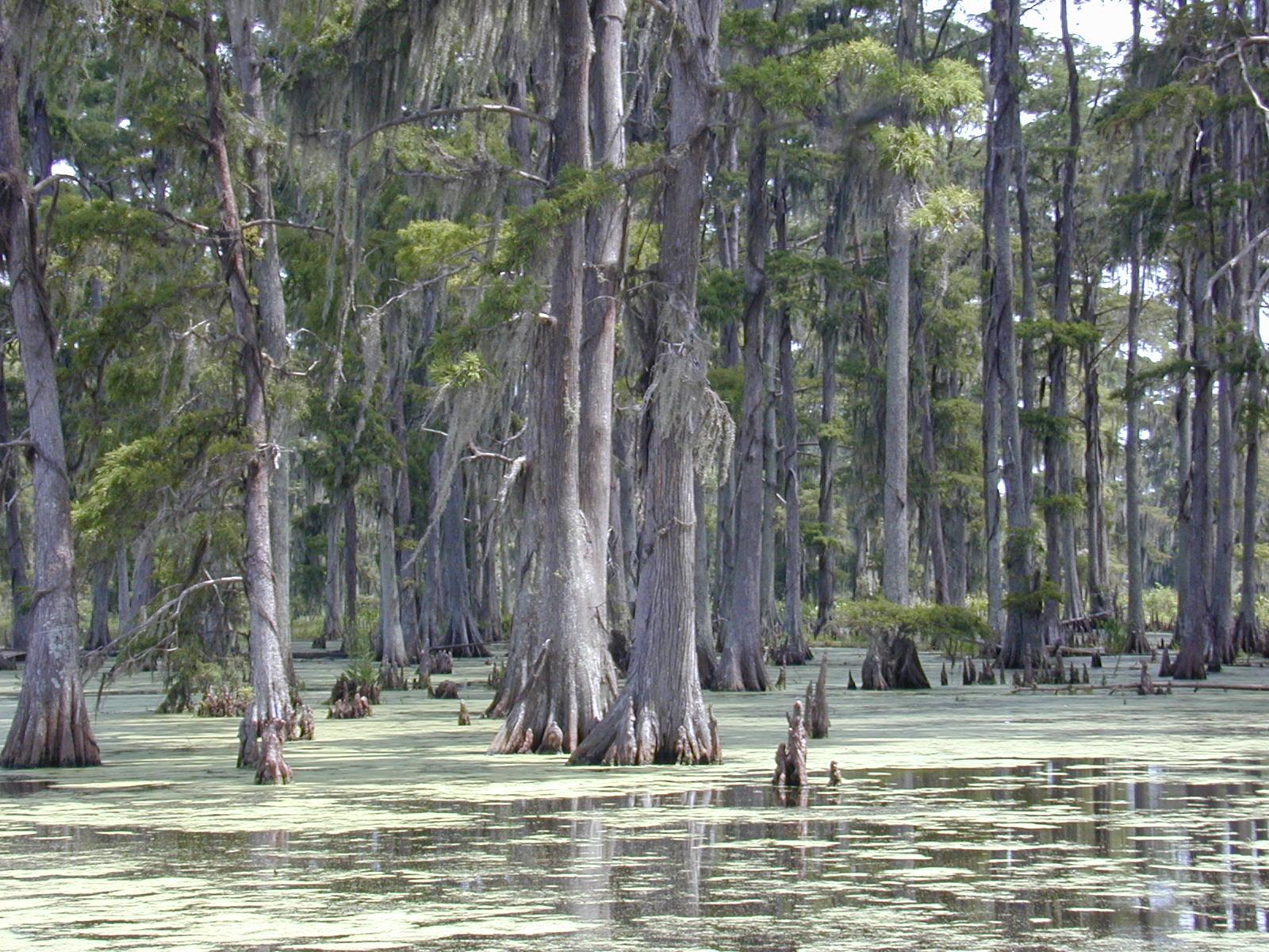 Swamplands USA